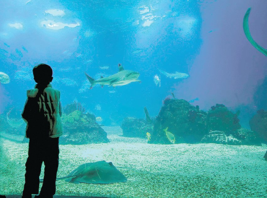 After being closed since March because of the coronavirus pandemic, the North Carolina Aquariums at Fort Fisher, Pine Knoll Shores and Roanoke Island will reopen Sept. 14.