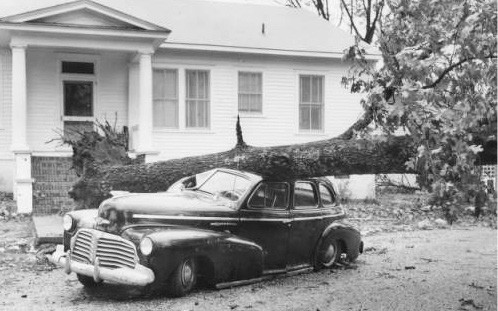 Trees like this one fell around Harnett County during Hurricane Hazel in 1954 causing extensive damage. Residents report damage like that done to the car shown was common in the days following the storms.