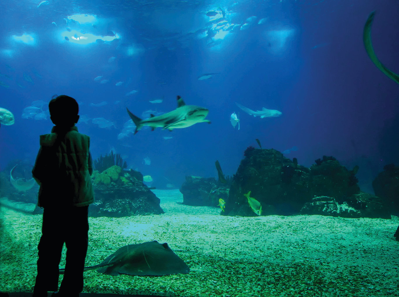 go behind the scenes at the n c aquarium the daily record