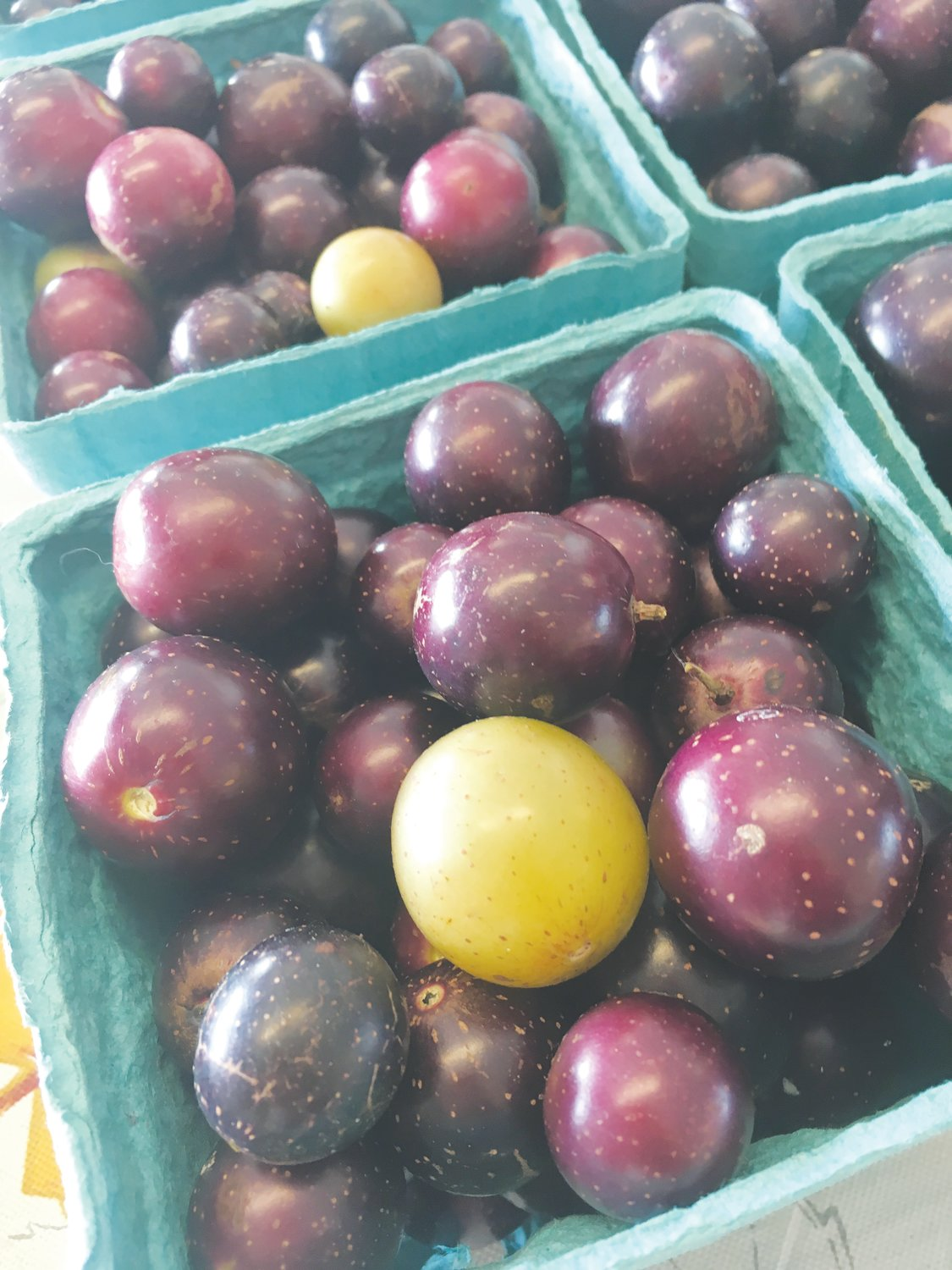 Muscadine grapes, shown here, will be available at the Farm Credit Farmers Market in September.