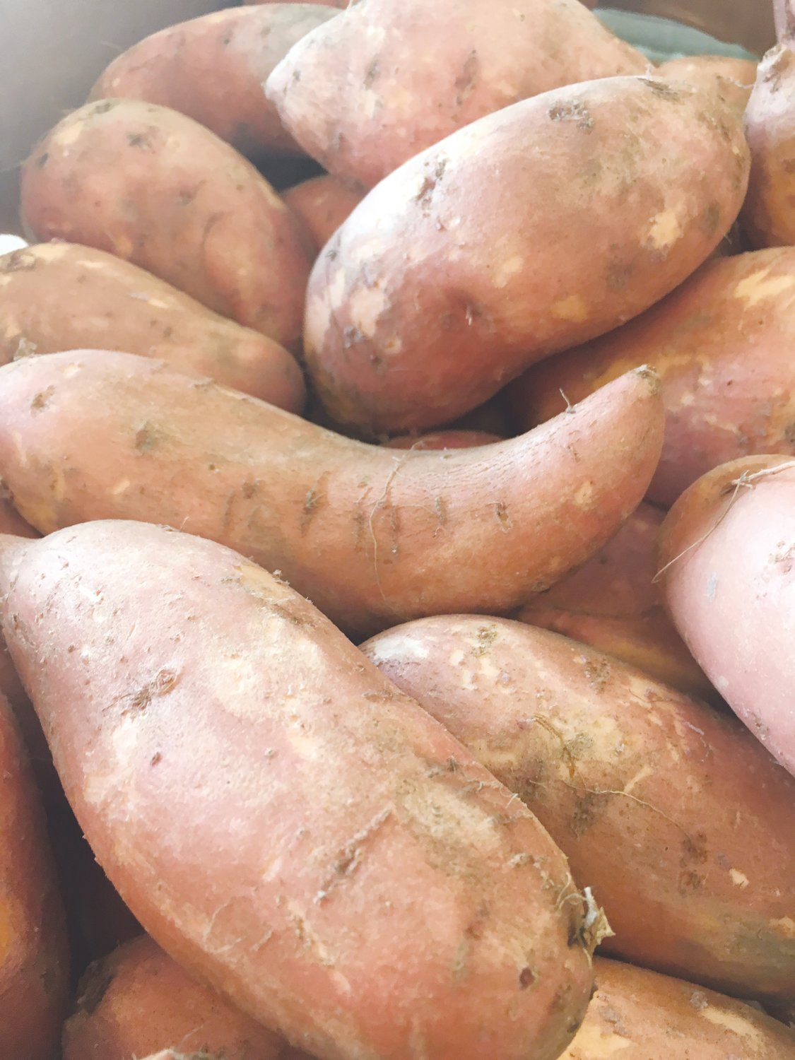 Sweet potatoes available at the Farm Credit Farmers Market.