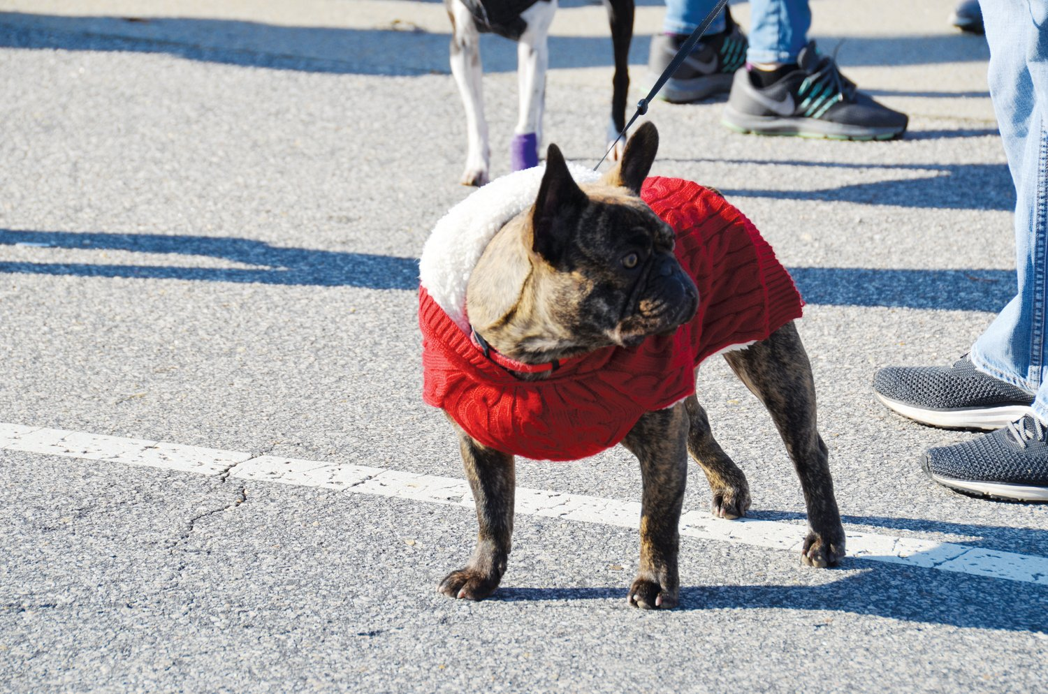 Four-legged parade-goers like Vader, shown here, joined hundreds of attendees for Angier's annual Christmas parade which was held Saturday.