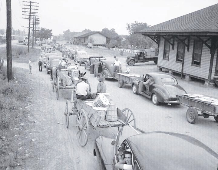 Cars and buggies line up to sell cucumbers at the Mount Olive Pickle plant.
