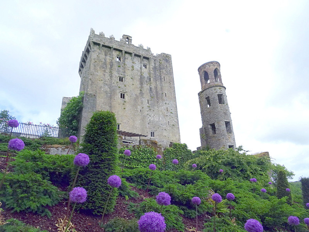 Purple flowers dot the landscape in front of Blarney Castle in Ireland.