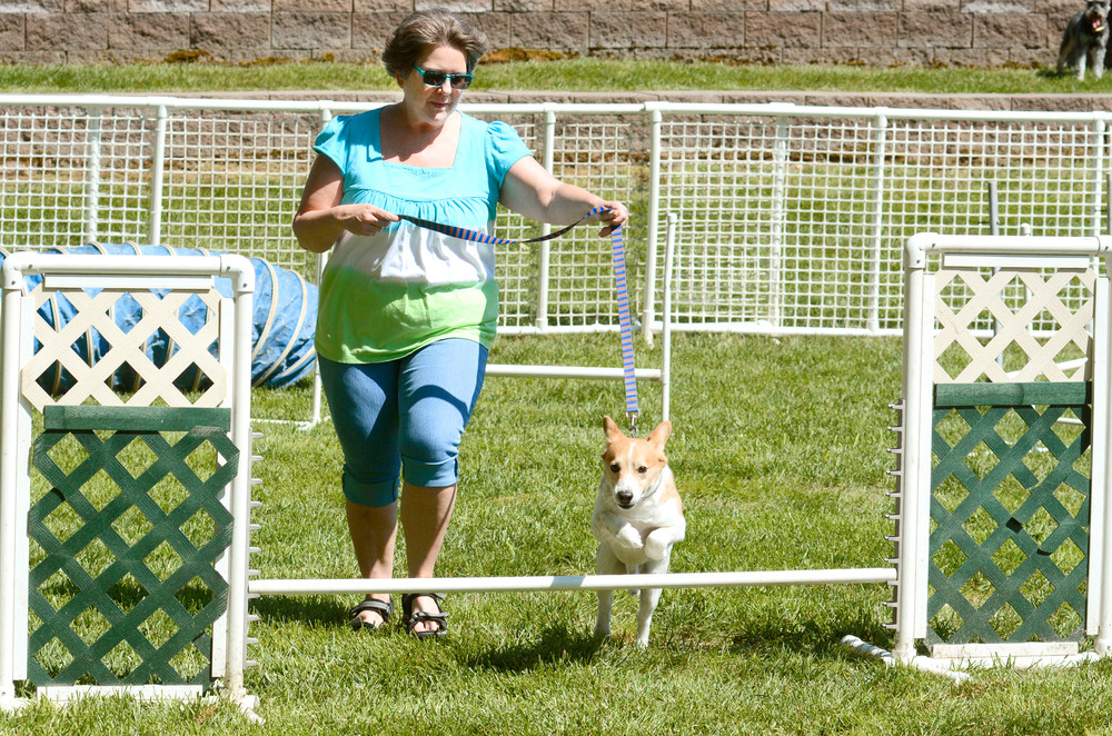Loretta Cordell leads Cory her corgi through the obstacle course.