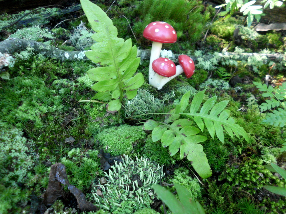 Bright clay mushrooms poke out of a mix of greenery in one of the tiny gardens.