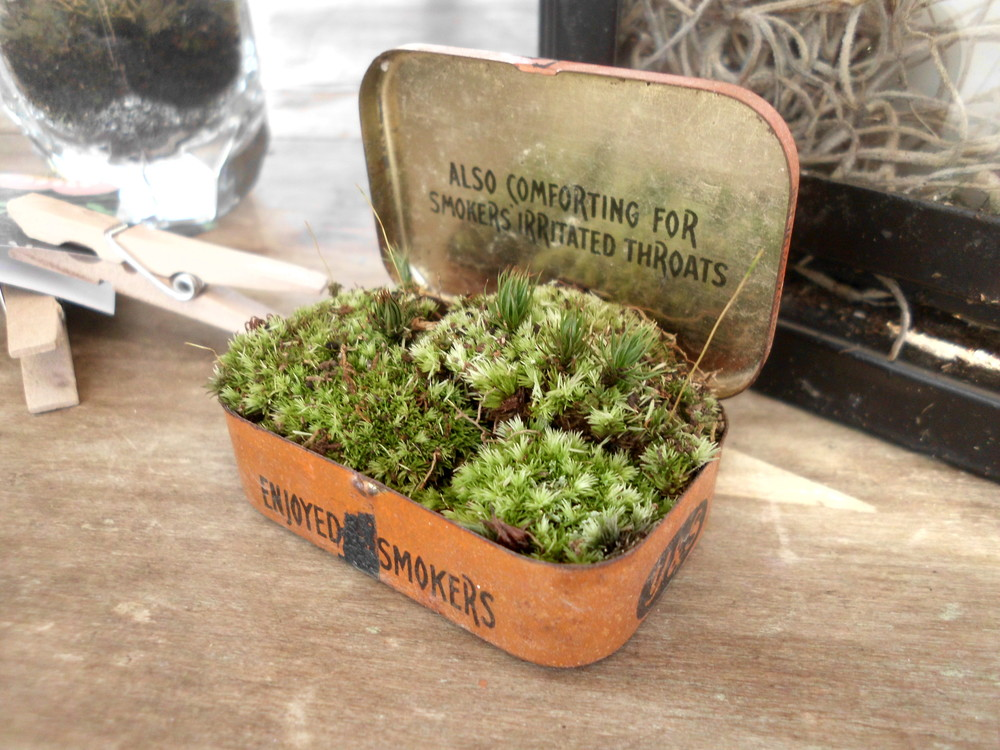 Lisa Braun and Samantha Hawkins create tiny living gardens inside unusual containers.