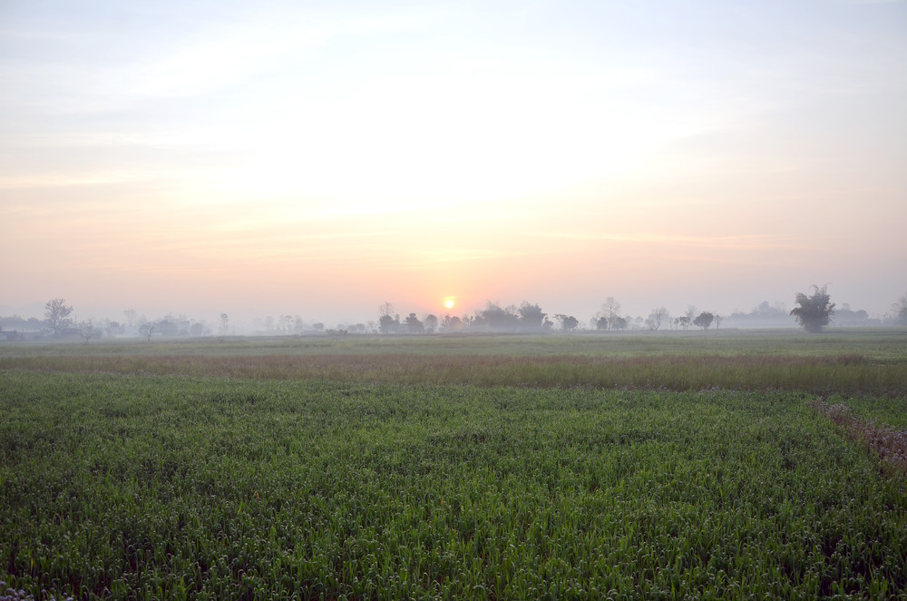 A misty, green field in a rural village in Bardiya.