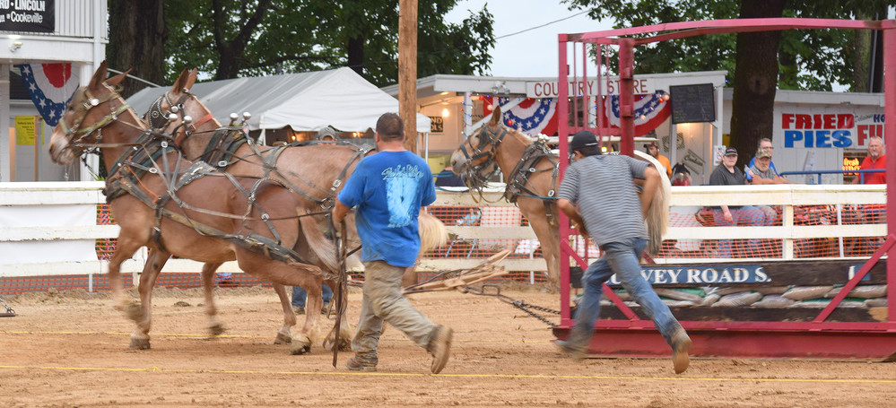 It's go time as mules and men lurch forward with a heavy load at the county fair mule pull.
