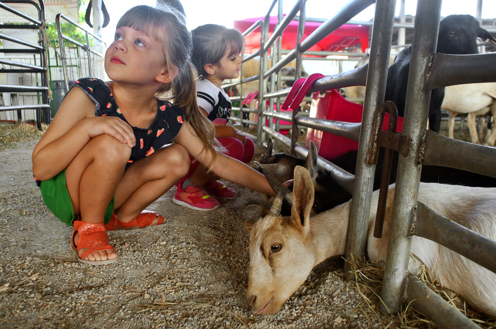 Claramae Clinton, four year old daughter of Chris and Carrie Clinton and Brylee Roberts, three year old daughter of Shane and Crystal Roberts check out the goats at the fair's petting zoo. Fairgoers will enjoy an outdoor meat cookery in the music barn at 5 p.m., music on the main arena at 5:30 p.m. photography demo in the exhibit hall and dirt bike/ATV technical terrain races, both at 6:30 p.m.