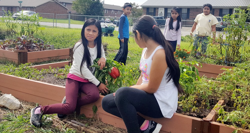 Jere Whitson Elementary School students check on some of the gardens that have been planted as part of the school's ag lab.
