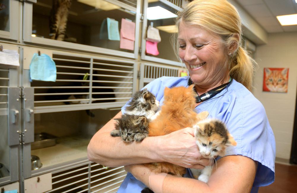 Cookeville-Putnam County Animal Shelter employee Lisa Harris holds an armful of kittens waiting to be adopted at the shelter.