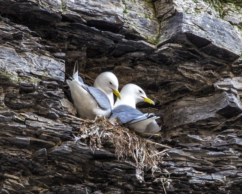 Birds nest in the nooks and crannies of the cliffs.