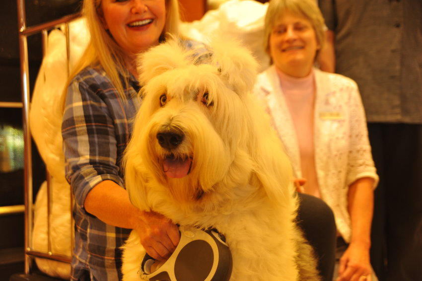 Adopted by Cindy Bellis, English Sheepdog Teddy is one of the animals that can benefit from the Fairfield Inn's donations to animal shelters in need of supplies.